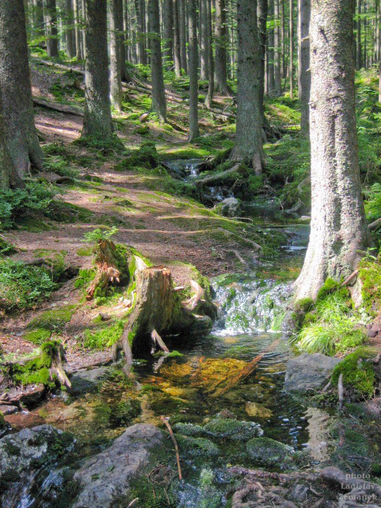 Les u Čertova jezera