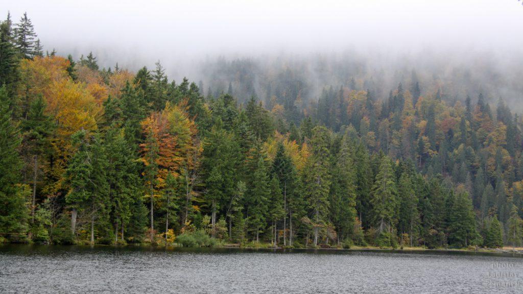 Velké Javorské jezero a okolí