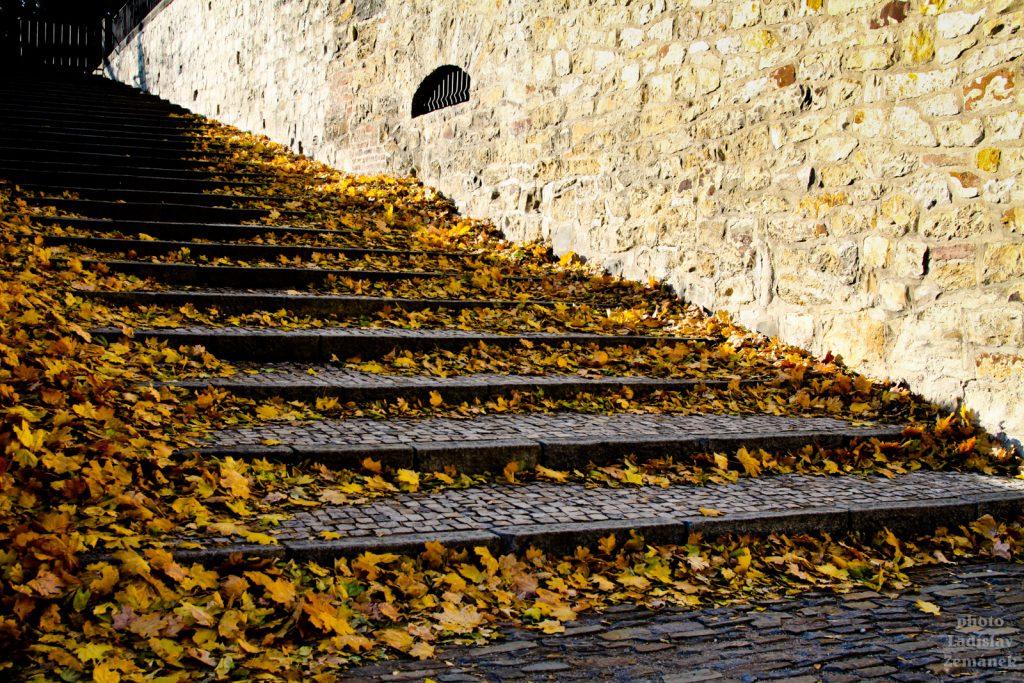 Královská zahrada - schody