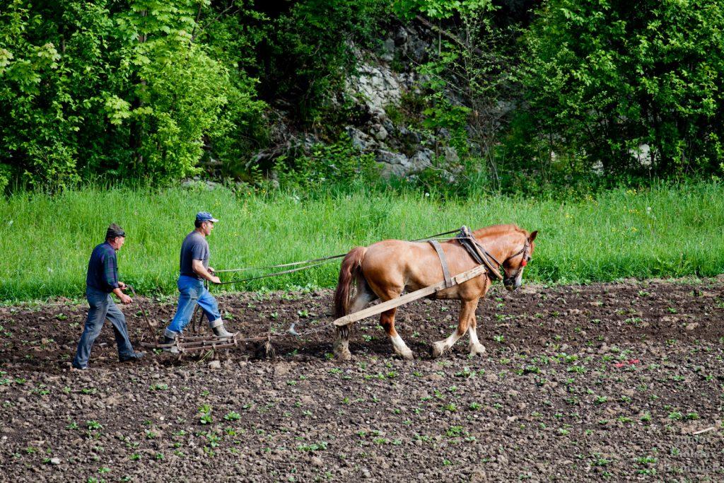 pole - orba s koněm