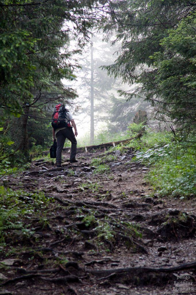 Stoupání lesem na Velký Choč