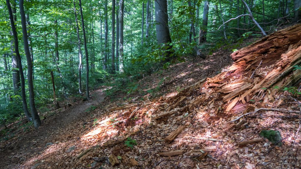 prales Stužica
