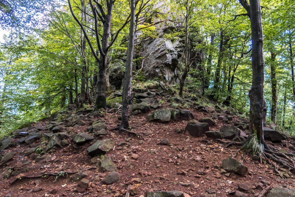 Sninský kameň - les