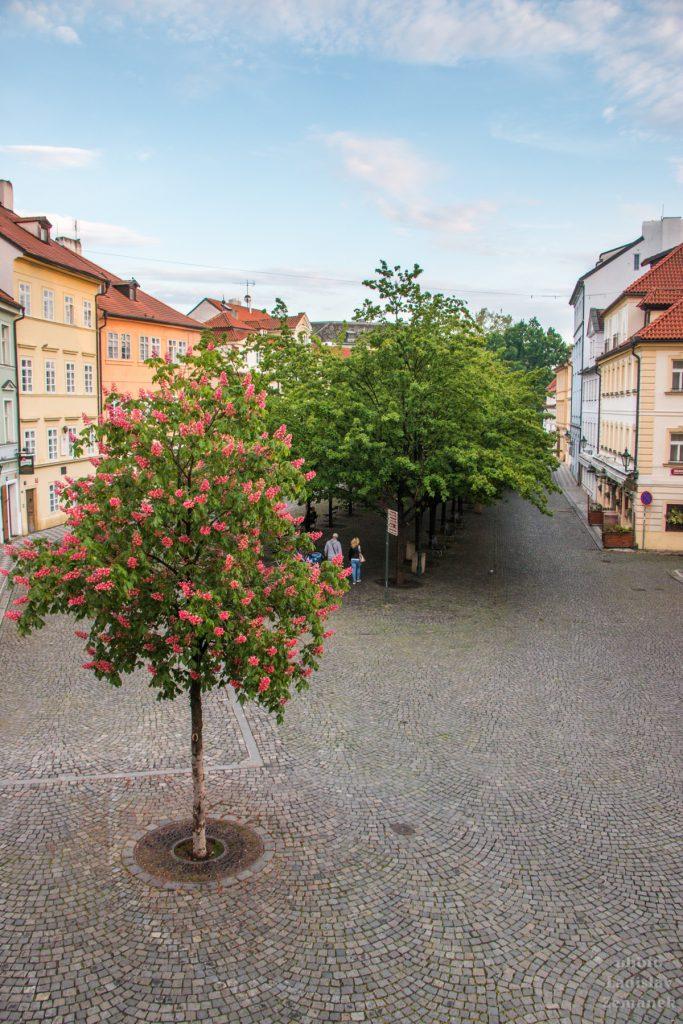 Praha bez lidí - Kampa