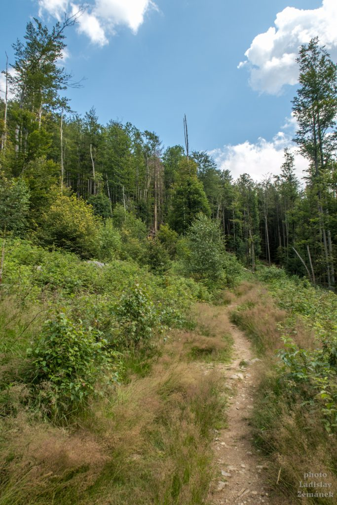 Bavorský les - cesta na Falkenstein