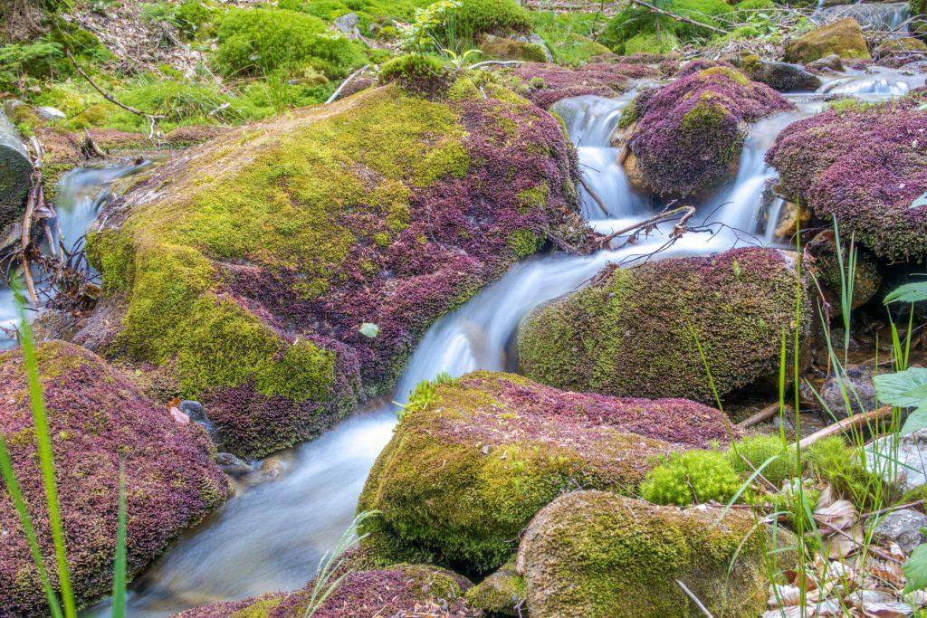 mech u potoka