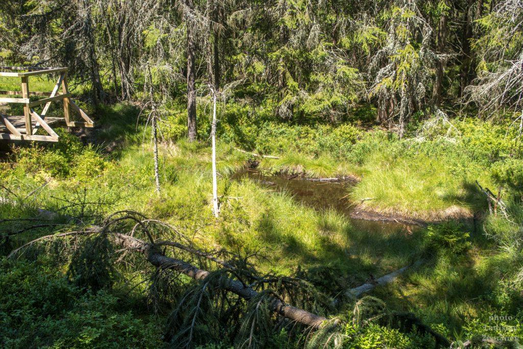 Mofety - Slavkovský les