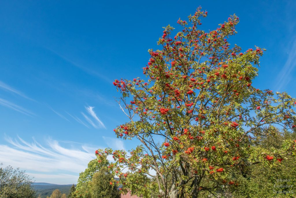 Jizerské hory - Jizerka - podzim