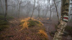 Děčínský Sněžník - podzimní les