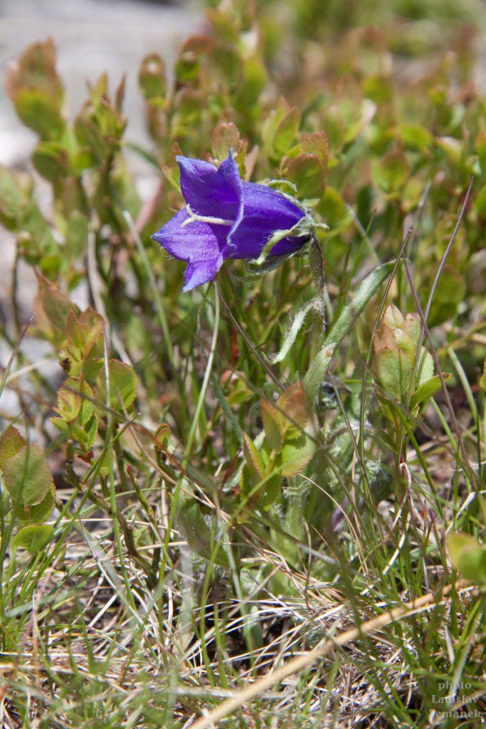 Flora Nízkých Tater