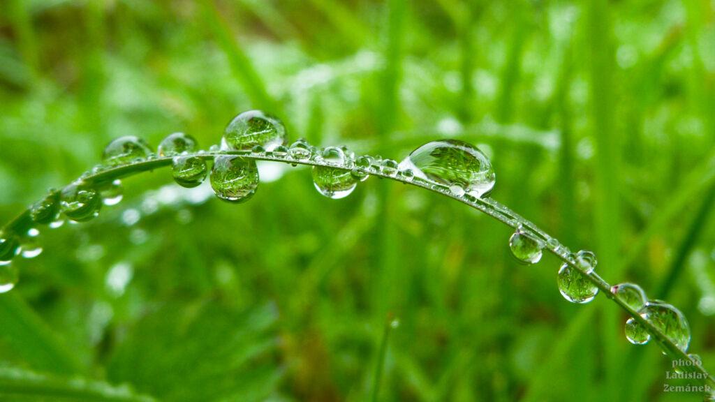 Po dešti na trávě