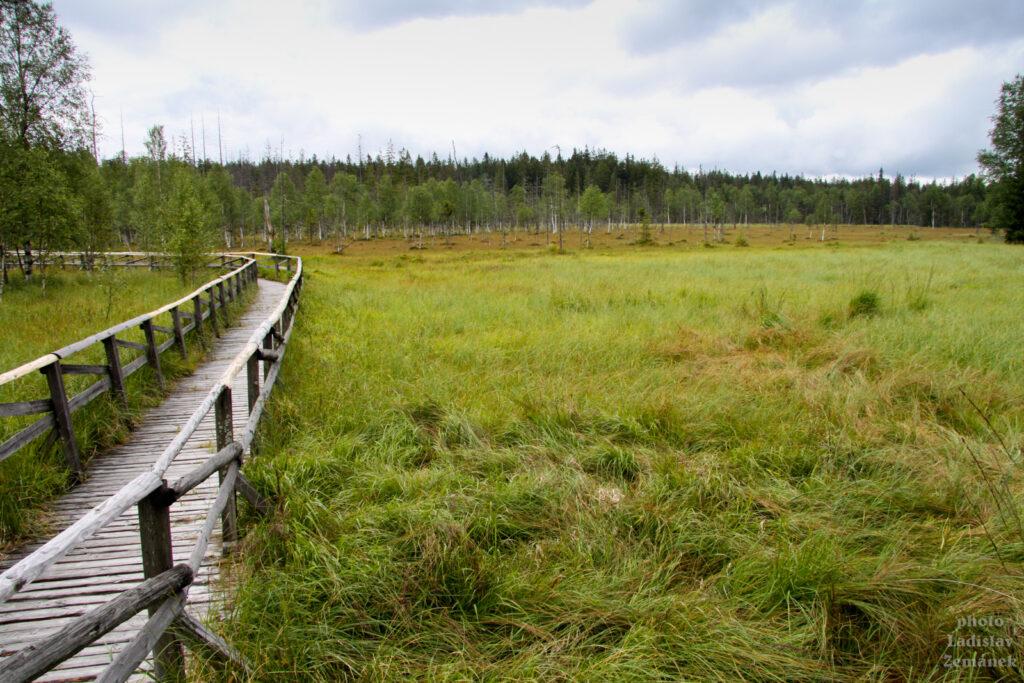 Rašeliniště pod Zielencem