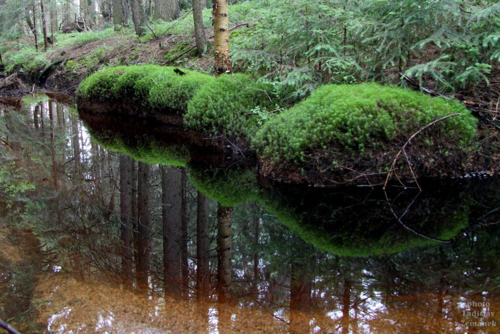 Orlické hory - Rašeliniště pod Zielencem