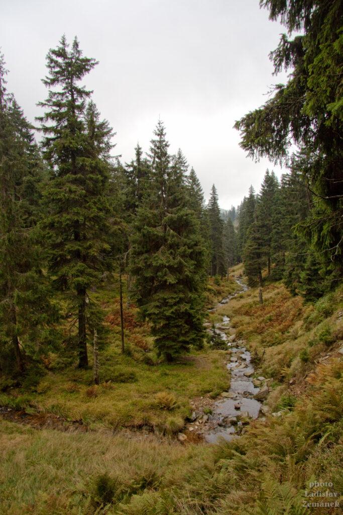 Jeseníky - podzimní les