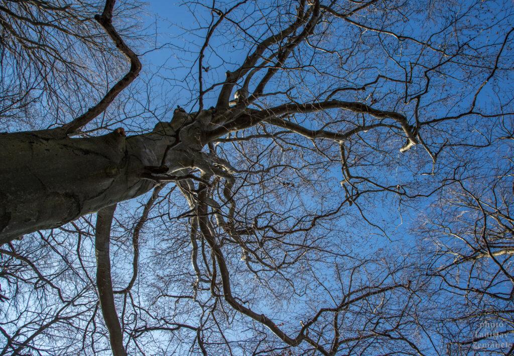 strom bez listů proti modré obloze