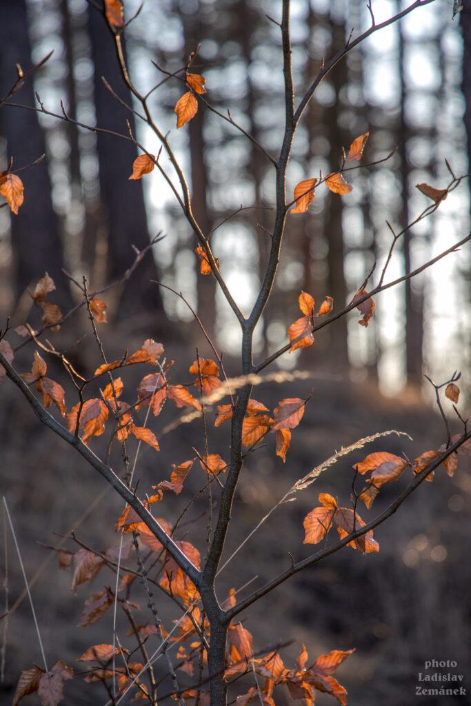 listí a tráva