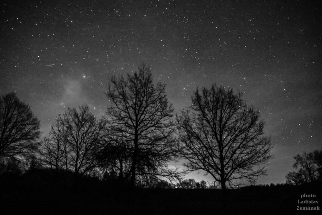 stromy a hvězdná obloha v pošumaví