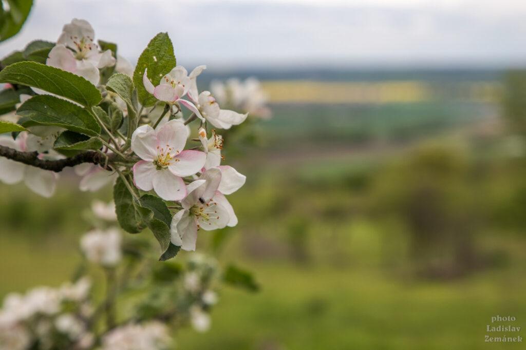 jaro pod hazmburkem