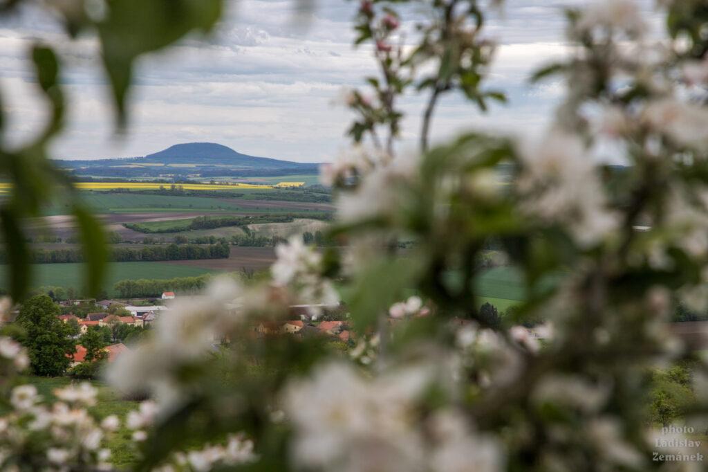 jaro pod hazmburkem - výhled na říp