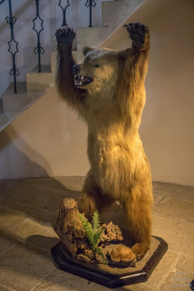 medvědice Máša