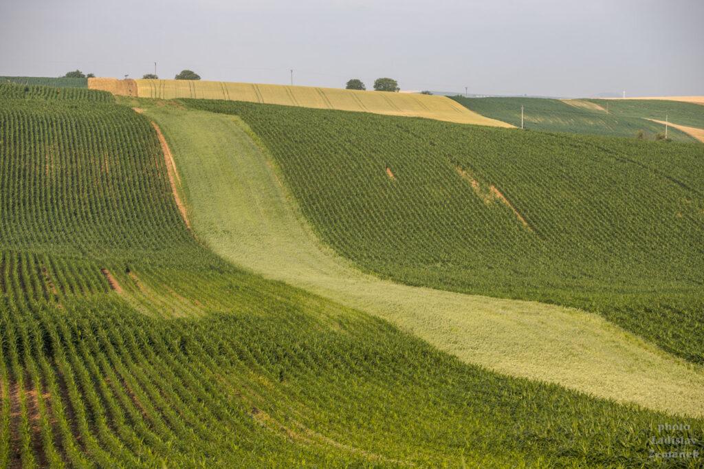 Moravské Toskánsko - Šardice a okolí