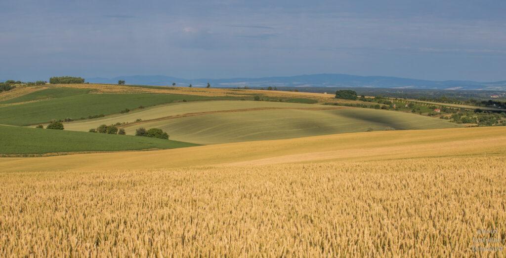 Moravské Toskánsko - výhled na pole u Stavěšic