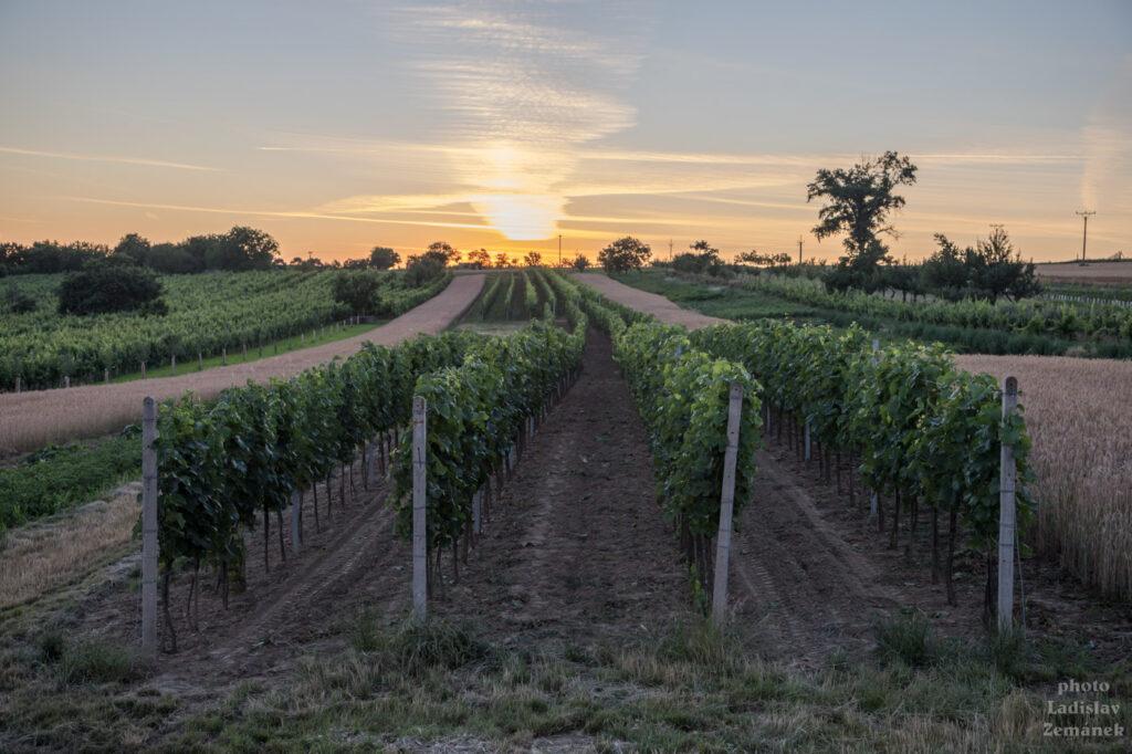 Svatobořice-Mistřín - západ slunce