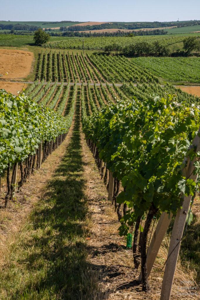 Kyjovská pahorkatina - vinohrady