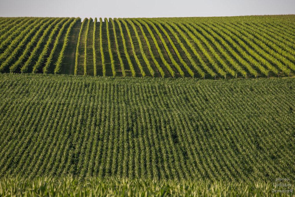 Hradištěk - linie na polích a vinicích