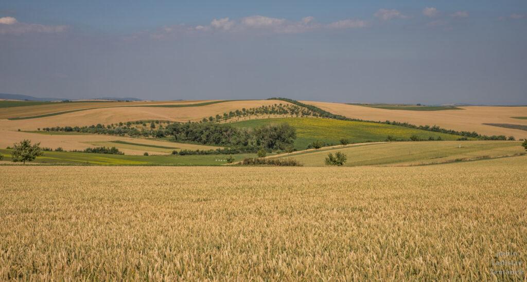 Šardice a okolí - Kyjovská pahorkatina / Moravské Toskánsko