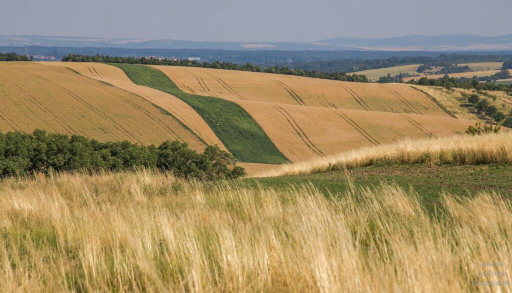 Šardice a okolí - zvlněná krajina Moravského Toskánska