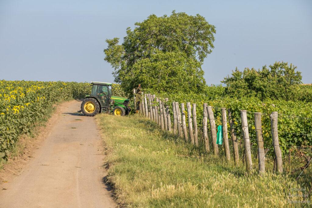 Šardice a okolí - Moravské Toskánsko - traktor u vinice