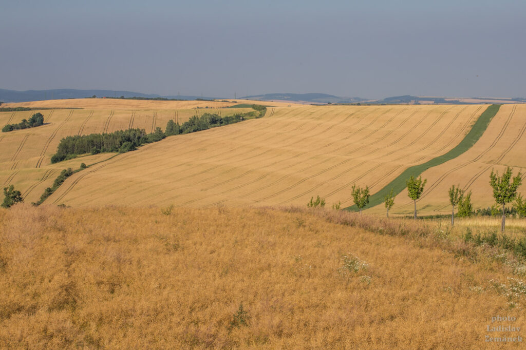Šardice a okolí - Moravské Toskánsko - výhled přes šardické biopásy