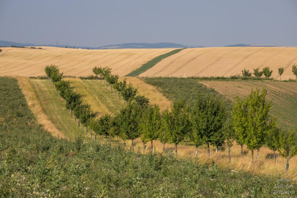 Šardice a okolí - Kyjovská pahorkatina - šardické biopásy