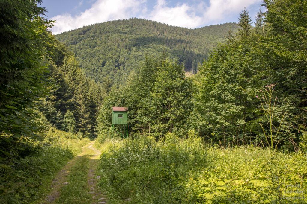 Borový potok - cesta k vodopádům