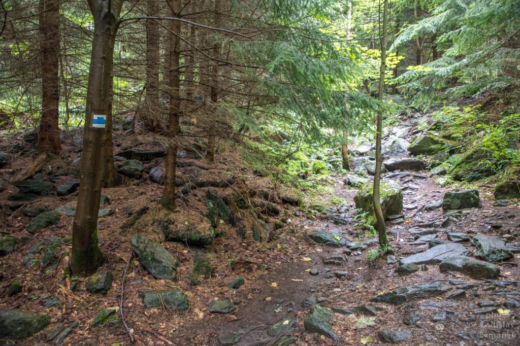 lesní cesta k vodopádům na Borovém potoce