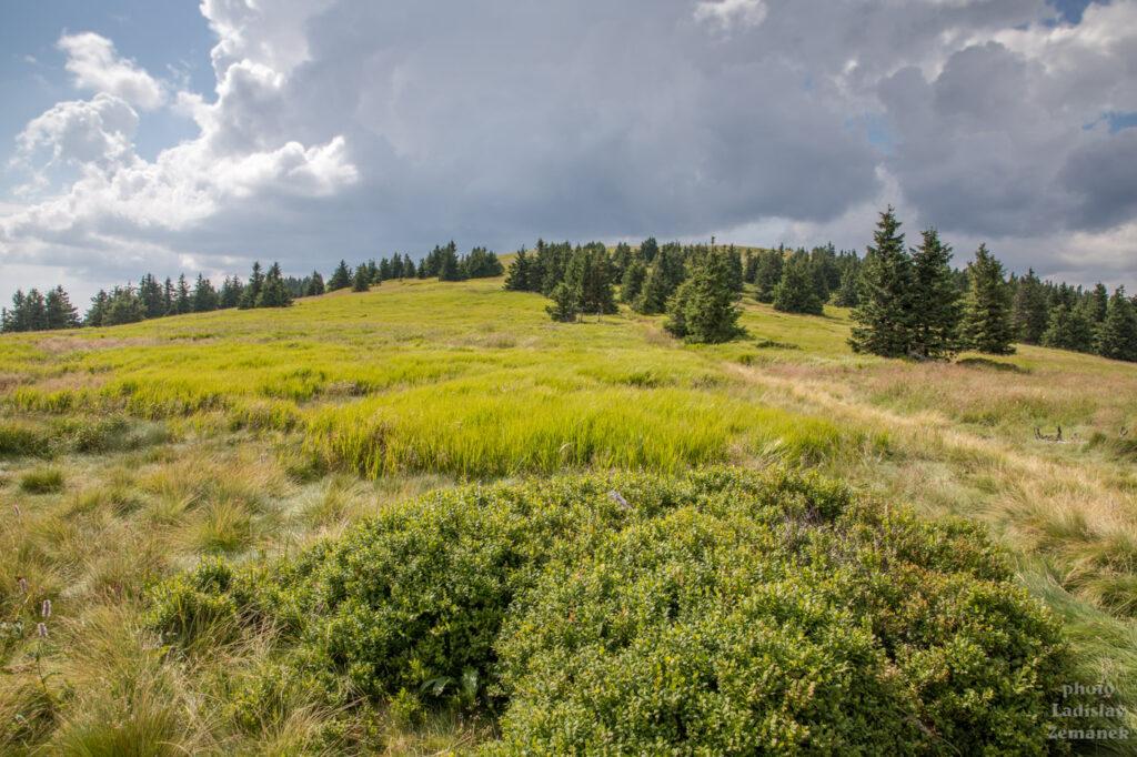 vrch Mravenečník - sedlo