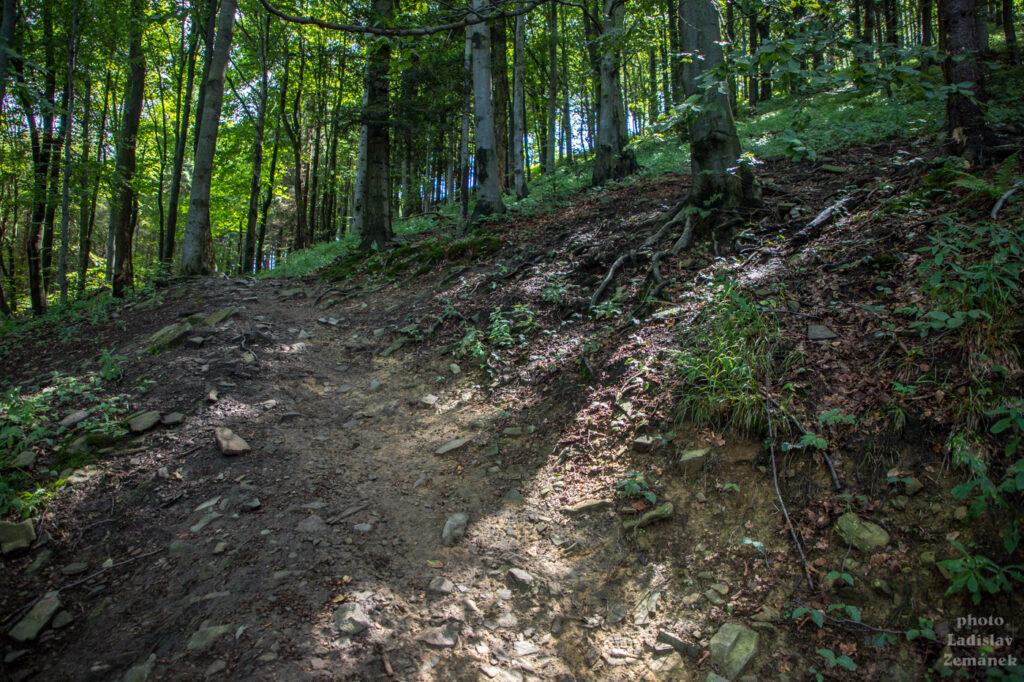 les - stoupání na Velký Javorník