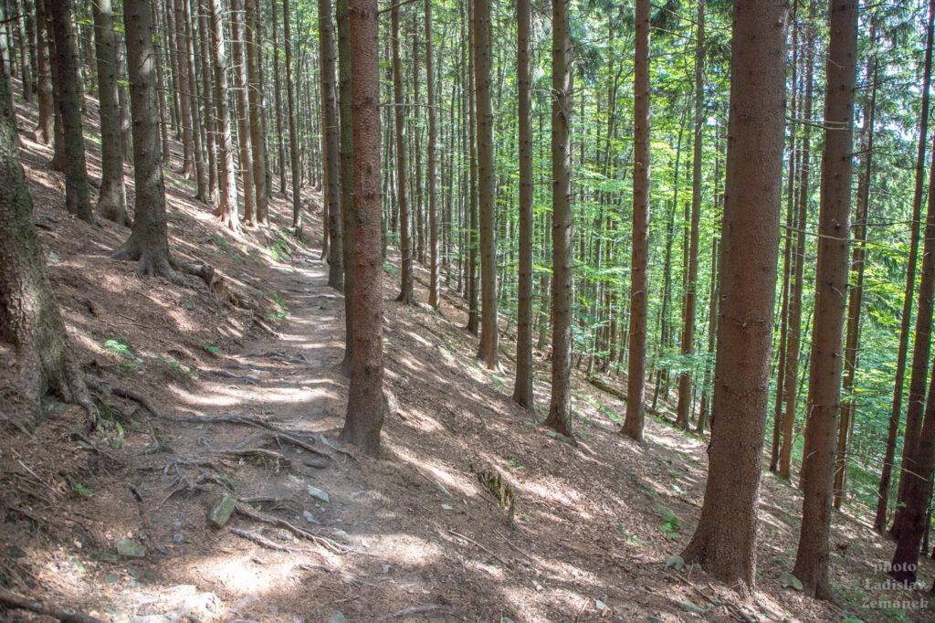 lesní cesta - nad přehradou Šance