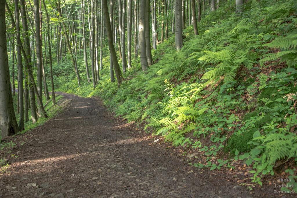 v lese pod Radhoštěm