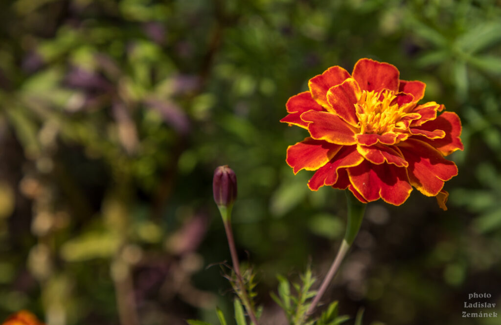 Zámek Orlík - v zahradě