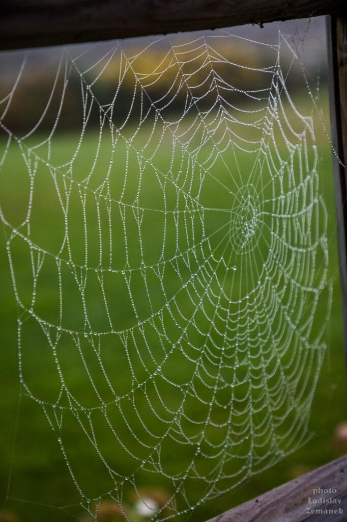 Pavučina s rosou za mlhavého podzimního rána