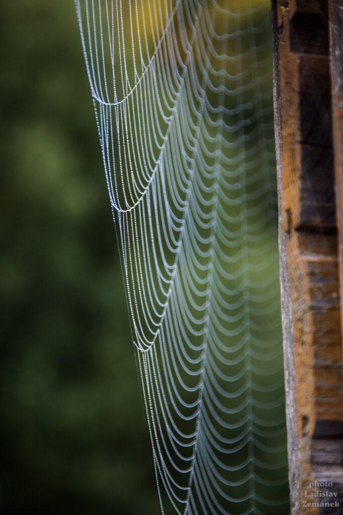 Pavučina s rosou za mlhavého rána