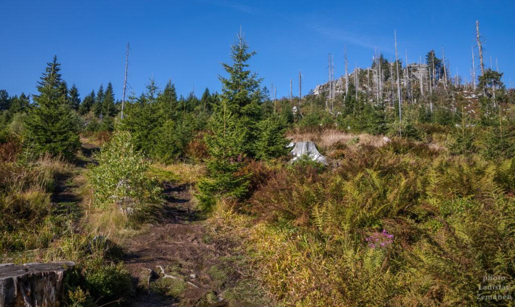 Lesní cesta při stoupání na Třístoličník