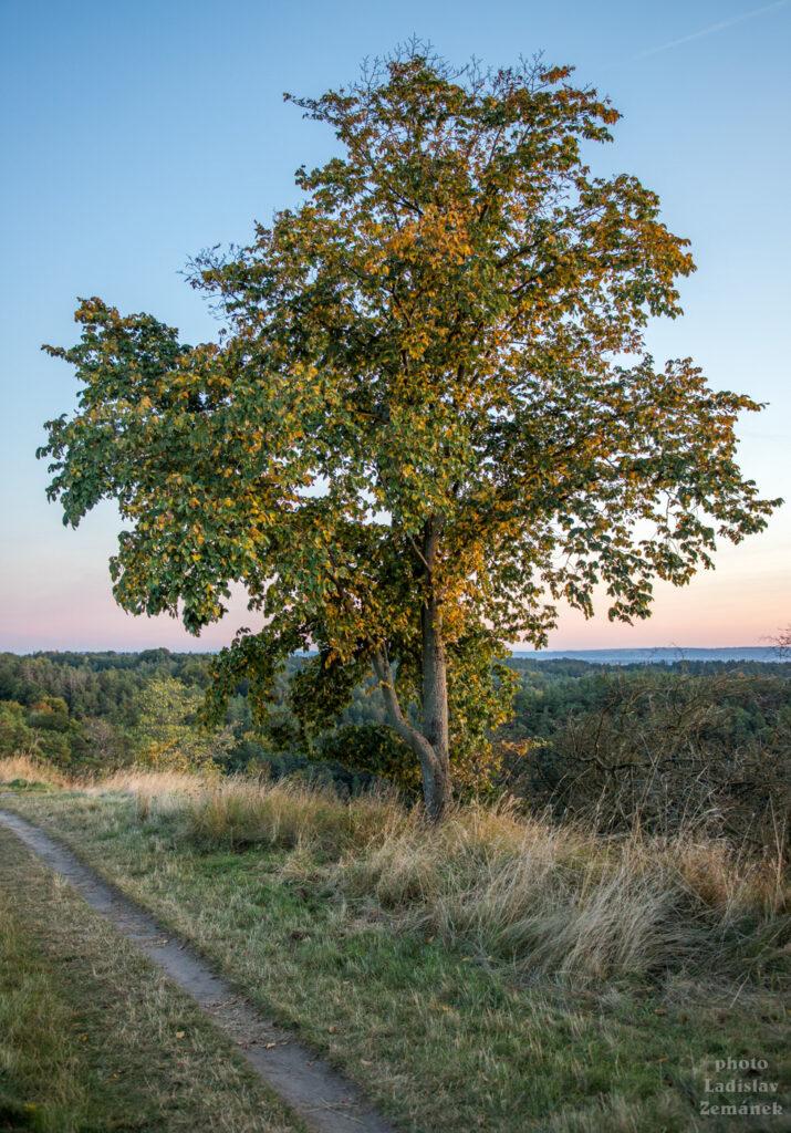strom na planině u hradiště Hrada a Klamorna